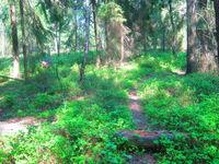 Naturschutzgebiet Wald