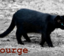 Scourge (Plaag)