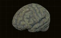 Мозг первобытного