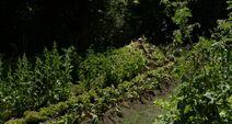 MPHfPC garden