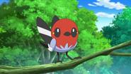 Ash's Fletchling