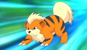 Growlithe anime