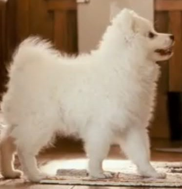 dog in the proposal