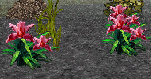 Necromancers Night Shade Flower