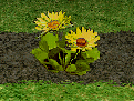 Narcissa's Gold Flower