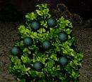Alkie Berries