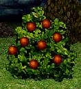 Power Berries