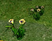 Arrant Rose Flower