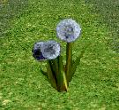 Wish Thistle Flower