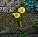 Scatter of Lion Fuzz Flower