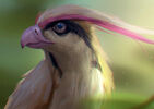 Rafael-de-guzman-pidgeot
