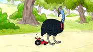 S6E24.117 RC Car Bumping into the Cassowary