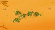S6E15.151 Baby Sea Turtles Emerging from the Sand