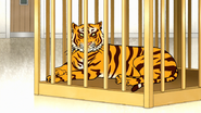 S7E26.050 Maellard's Tiger