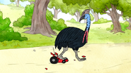S6E24.118 Cassowary Smashing the RC Car