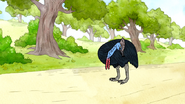 S6E24.109 Cassowary Pecking Itself