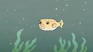 S4E12.174 Pufferfish