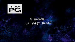 A bunch of baby ducks title card