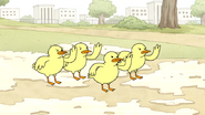 S4E19.61 Baby Ducks Begin to Fight
