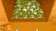 S6E15.191 Baby Sea Turtles Looking at Each Other