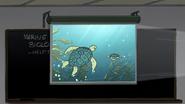 S6E15.001 Sea Turtles on Screen