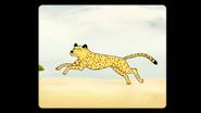 S8E25.066 Cheetah