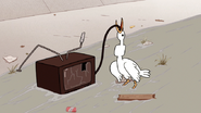 S6E07.150 A Goose Trying to Swallow the TV Plug