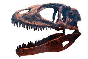 Carcharodontosaurus ROM-IMG 7497