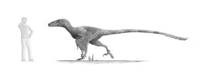 Utahraptor v2 by steveoc86-d48ytii