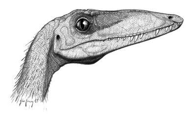 Coelophysis-bauri head