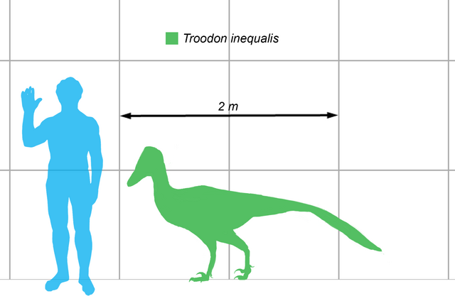 File:Stenonychosaurus-scale.png