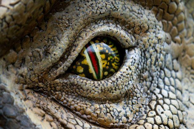T-rex Eye