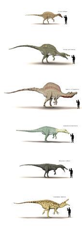 File:Spinosauridae size shart by hyrotrioskjan-d3hjudi.jpg