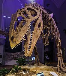 File:Giganothosaurus.jpg