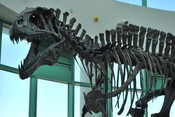 Acro skeleton