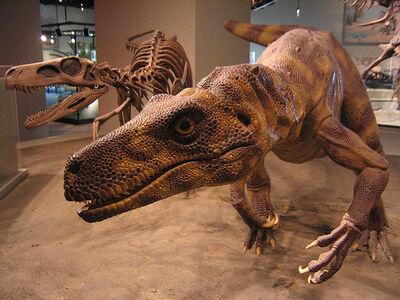 Herrerasaurus8
