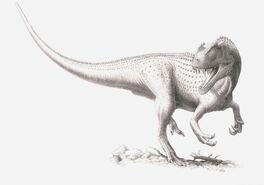 Ceratosaurus-1