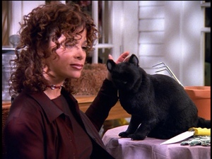 Paula Abdul Petting Salem