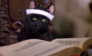 Salem and the book