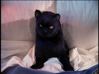 Salem in Sabrina's Bed