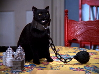 Salem in Ball and Chain