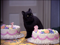 Salem Eats Cake