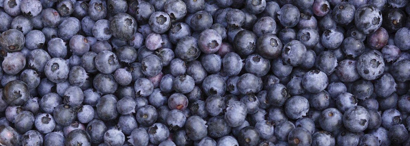 blueberries 1400x500 jpg
