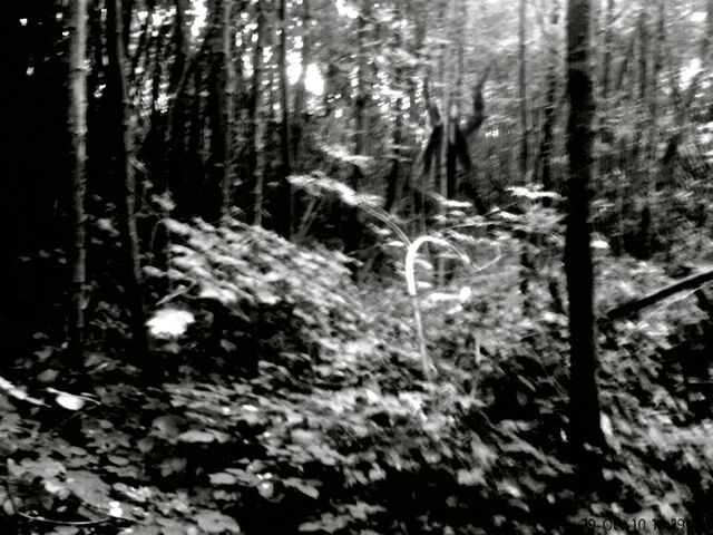 file the slender man in the forest jpg