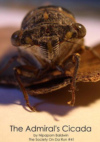 File:Admiral's cicada.jpg