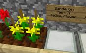 Dandelioncrossbreed