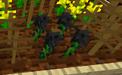Blackthorn