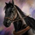 Liang Horse - RTKXIII