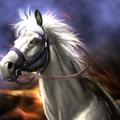 White Dragon - RTKXIII