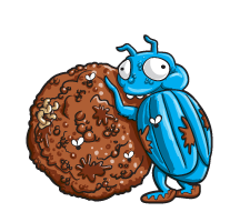 Dung-bug